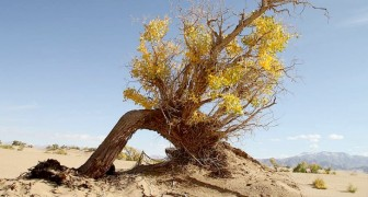 Nel deserto del Sahara crescono più alberi del previsto: una possibile arma contro i cambiamenti climatici