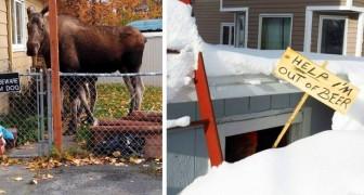 16 photos drôles montrent que le Canada est un pays avec un grand sens de l'humour