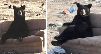 Een vrouw remt plotseling als ze een beer met gekruiste poten op de bank ziet zitten
