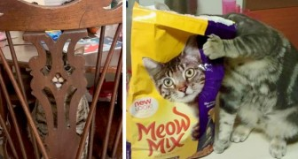 15 people who caught their cats in the strangest places and positions