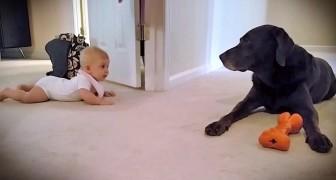 Een baby leert kruipen en beloond de hond, super schattig