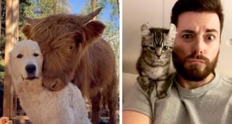 20 animali che non hanno potuto fare a meno di mettersi in posa davanti alla fotocamera