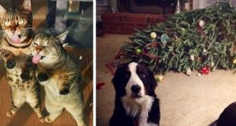 17 foto's van honden en katten die de huisregels op geen enkele manier respecteren