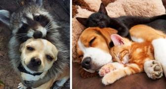 15 foto tenerissime mostrano le improbabili amicizie che possono nascere nel mondo animale