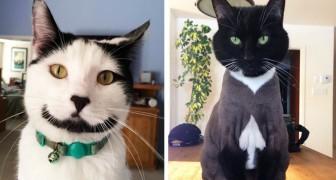 De 21 meest ongewone katten, geboren met een bijzondere vlek op hun vacht die hen uniek maakt in de wereld