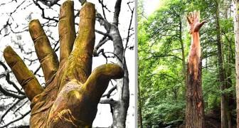 Un artista trasforma un albero destinato all'abbattimento in una gigantesca mano protesa verso il cielo