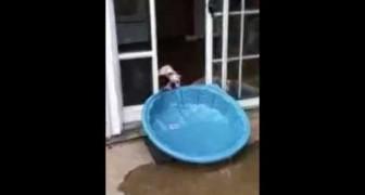 Cane tenta di trascinare una piscina dentro casa