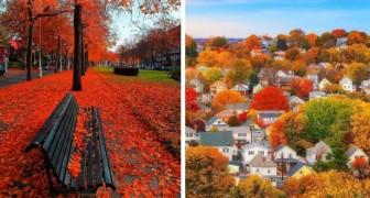 19 foto's van bossen en steden over de hele wereld betoverend gemaakt door de komst van de herfst