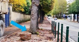 Caen décide d'enlever le bitume des trottoirs pour faire respirer les racines des arbres