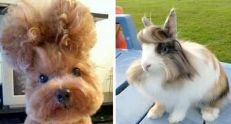 17 animais com looks tão extravagantes que parecem ter acabado de sair do cabeleireiro
