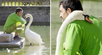 A gardener becomes best friend to a lone swan: he feeds and cares for him every day
