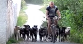 Dieser Mann lebt mit 16 aufgeweckten Hunden: Ihre Erziehung ist einfach super