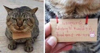 A cat comes home after 3 days with a message around his neck: he ate 3 fish without paying