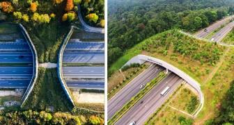 16 Brücken, die Tiere sicher überqueren können: wunderbare Beispiele für das Miteinander von Mensch und Natur