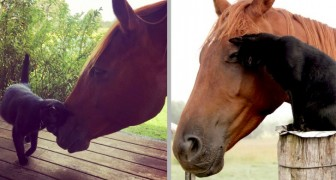 Un gatto e un cavallo diventano amici per la pelle: dopo sette anni sono praticamente inseparabili