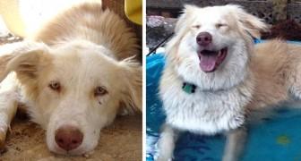 Ces photos montrent 18 animaux avant et après leur adoption : ils ont retrouvé l'énergie et une vie meilleure