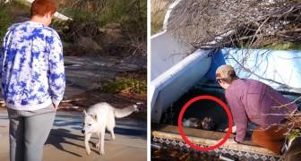 Eles visitam um parque aquático abandonado e encontram 2 cães de rua que os levam até um amigo necessitado
