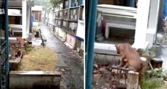 Een hond bewaakt elke dag het graf van zijn baasje die drie maanden eerder stierf: hij wil hem niet verlaten