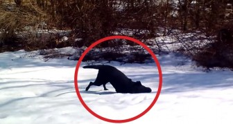 This dog sliding in the snow is having the best time of his life !!
