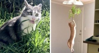20 gatti che hanno avuto degli improvvisi attacchi di isteria lasciando interdetti i loro padroni