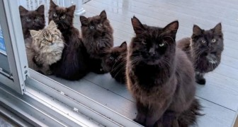 A stray cat thanks the woman who saved her by bringing her 6 kittens to the front door