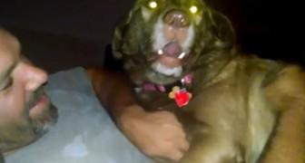 Tentam tirar este cachorro da cama. Veja a sua reação...