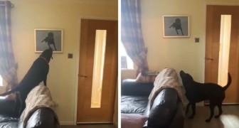 Il cane si emoziona quando vede il ritratto del suo fratellino scomparso: il video della commovente scena