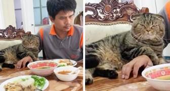 18 katter som är stolta över att helt dominera sina ägares liv