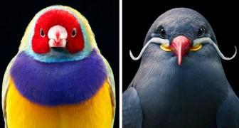 Dieser Fotograf hält die seltensten und farbenprächtigsten Vögel in faszinierenden menschlichen Posen fest
