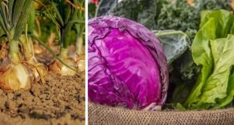 9 ortaggi da coltivare in inverno, perfetti per godere dei frutti della terra anche quando fa freddo