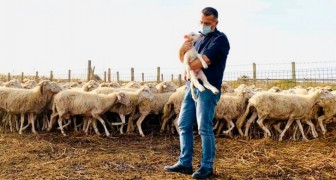 A shepherd falls ill with Covid-19 and can no longer look after his flock: the mayor decides to stand in for him