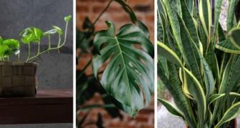 10 splendide piante che crescono rapidamente e che sono facili da coltivare in casa