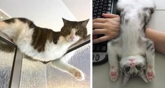17 Katzen, die keine Ahnung haben, was es bedeutet, die Privatsphäre von Menschen zu respektieren