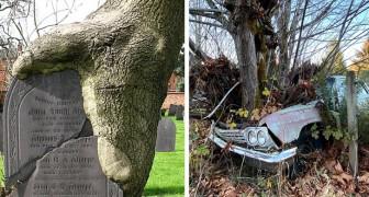 20 Beispiele, in denen die Natur sich zurückerobert hat, was ihr gehörte, und Orte und Gegenstände auf faszinierende Weise verwandelt hat