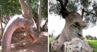 18 arbres qui rappellent autre chose et qui ont semé la confusion avec leurs formes bizarres