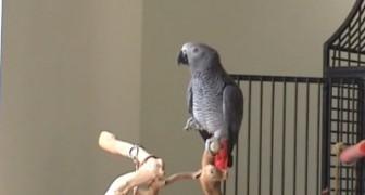 Suona una melodia al pianoforte: la risposta del pappagallo è straordinaria!