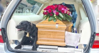 A sweet little dog climbs up next to the coffin of her deceased master and accompanies him on his last earthly journey