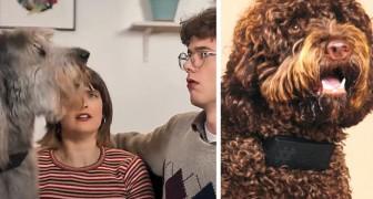 Un'azienda crea uno speciale collare che traduce l'abbaiare dei cani in parolacce