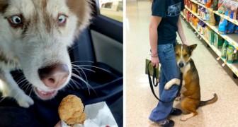 18 cães muito expressivos que surpreenderam seus donos com reações hilárias
