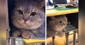 En tjej tar med sin katt på lektionen för att inte lämna den ensam och gömmer den under skolbänken, en mycket rolig situation