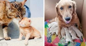 15 mamme a quattro zampe il cui amore per i cuccioli non ha bisogno di essere spiegato