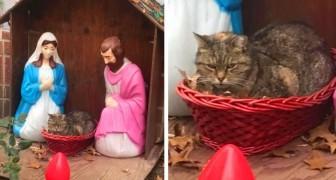 Uma mulher nota uma representação inusitada do presépio na rua: em vez do menino Jesus, há um gato mal-humorado