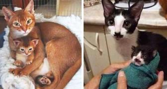 15 gatti che non hanno bisogno di alcun test del DNA per dimostrare di essere genitore e figlio
