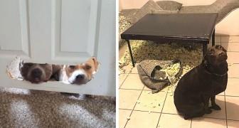18 chiens pris la patte dans le sac, qui ont affiché d'irrésistibles expressions de culpabilité