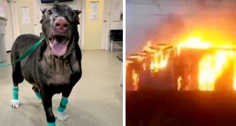 Questa coraggiosa cagnolona ha salvato gli anziani di una casa di riposo da un devastante incendio