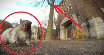 A man tries to film squirrel, but didn't expect this to HAPPEN!