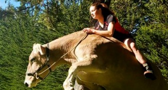 Her parents won't buy her a horse: she decides to teach a cow how to show jump