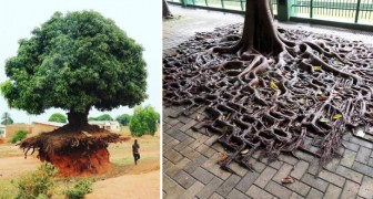 20 alberi che ti dimostrano come la voglia di vivere sia in grado di superare qualsiasi avversità