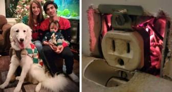 Il cane salva la sua famiglia da un principio di incendio: aveva fiutato qualcosa di strano nella presa elettrica
