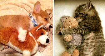 16 photos of cute animals that just can't fall asleep without their favorite toy